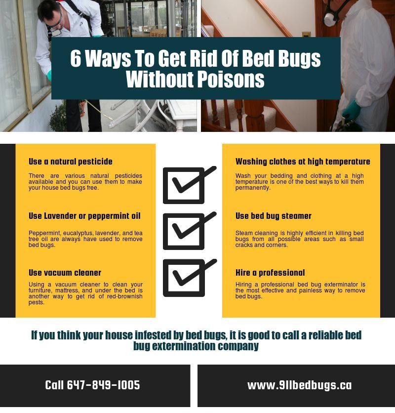 6 Ways To Get Rid Of Bed Bugs Without Poisons View More httpwww