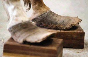 Houston Spca Nursing Seized Montgomery County Horses Back To