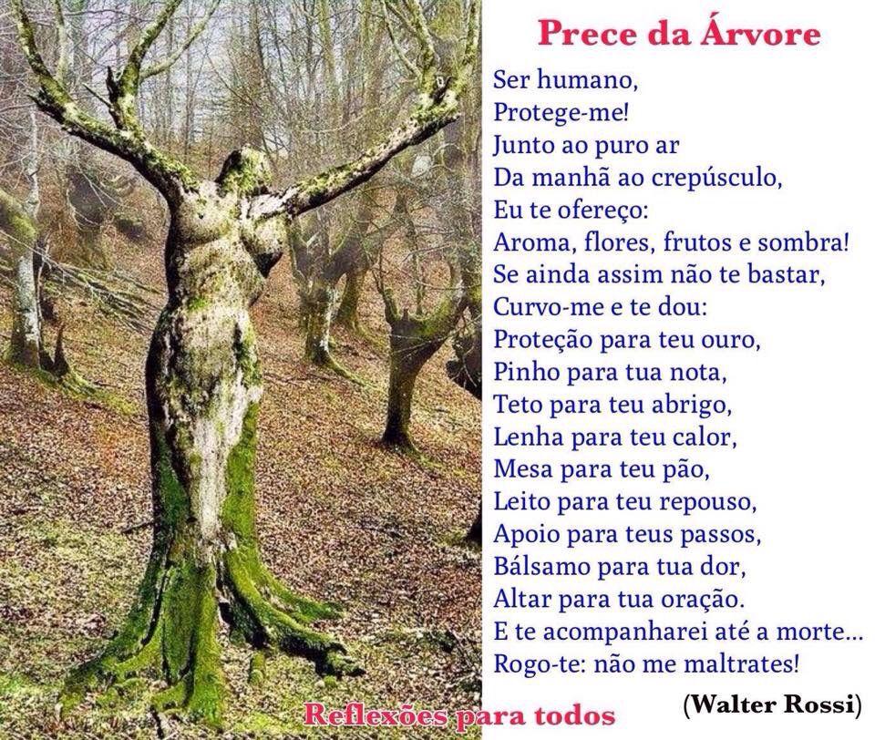 21 De Setembro Dia Da árvore Prece Da árvore E Outras Reflexões