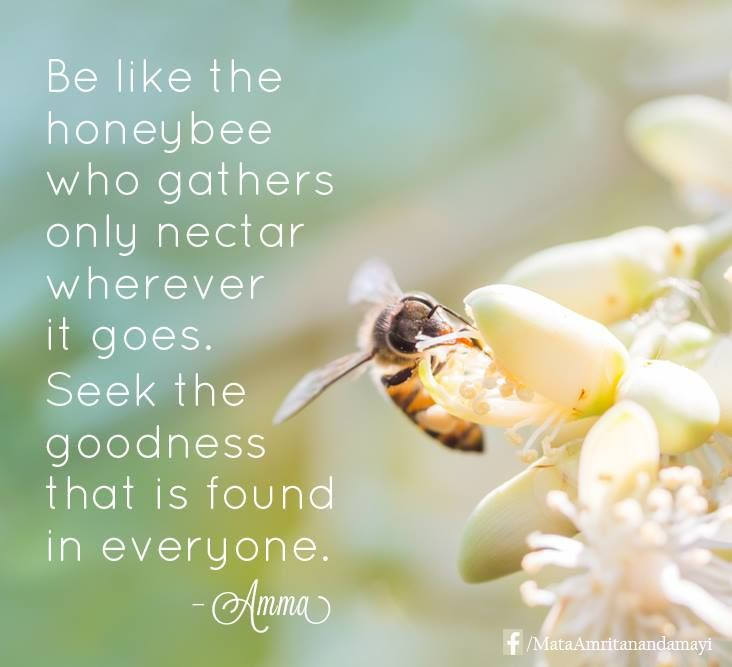 Divine Love Quotes: Be Like The Honey Bee