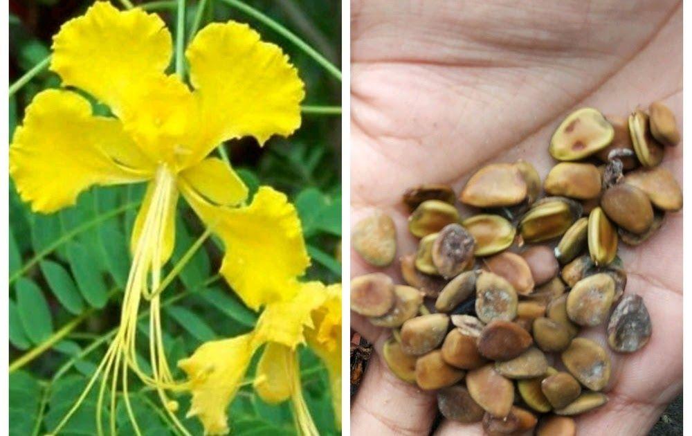 Gambar Bunga Matahari Dan Bagian Bagiannya Karena Bunga Memiliki Bagian Bagiannya Tangkai Bunga Berfungsi Sebagai Penopang Dan Pe Di 2020 Bunga Bunga Matahari Benih