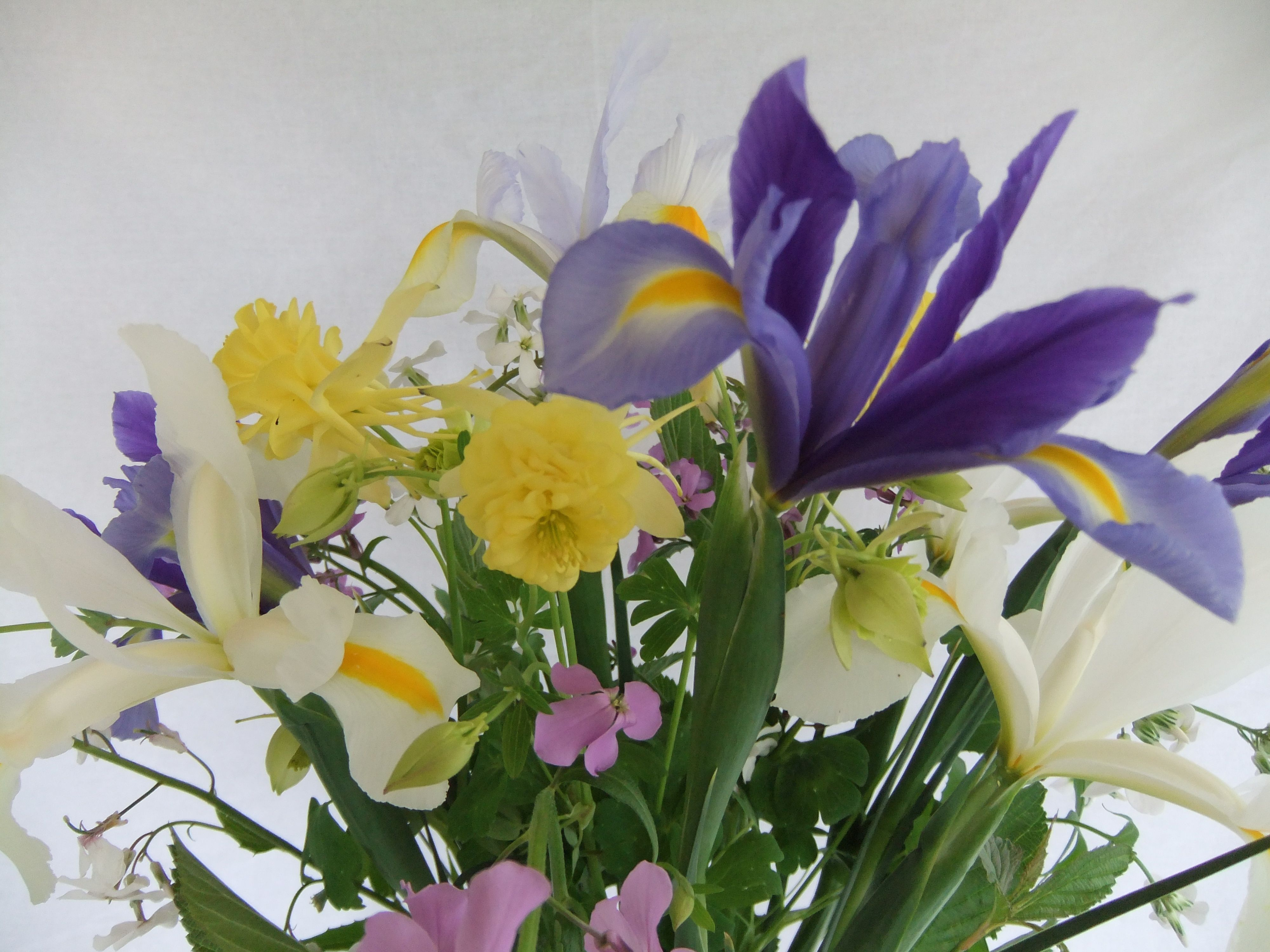 Dutch Iris, Aguilegia and sweet rocket - an early summer bouquet of ...
