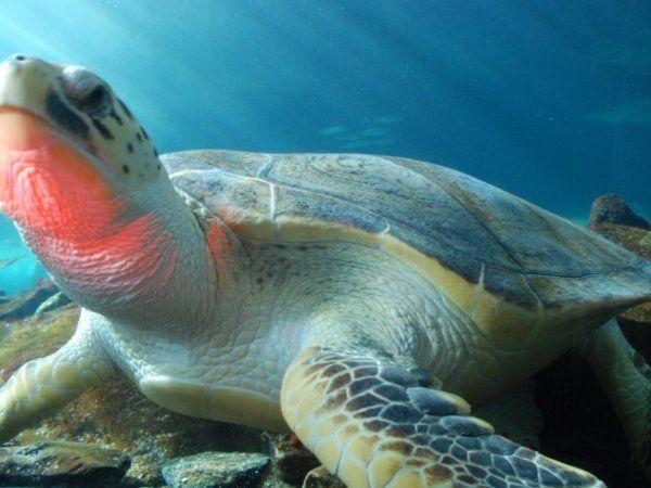 Magic Turtle At Sydney Aquarium Turtle Aquarium Travel Blog