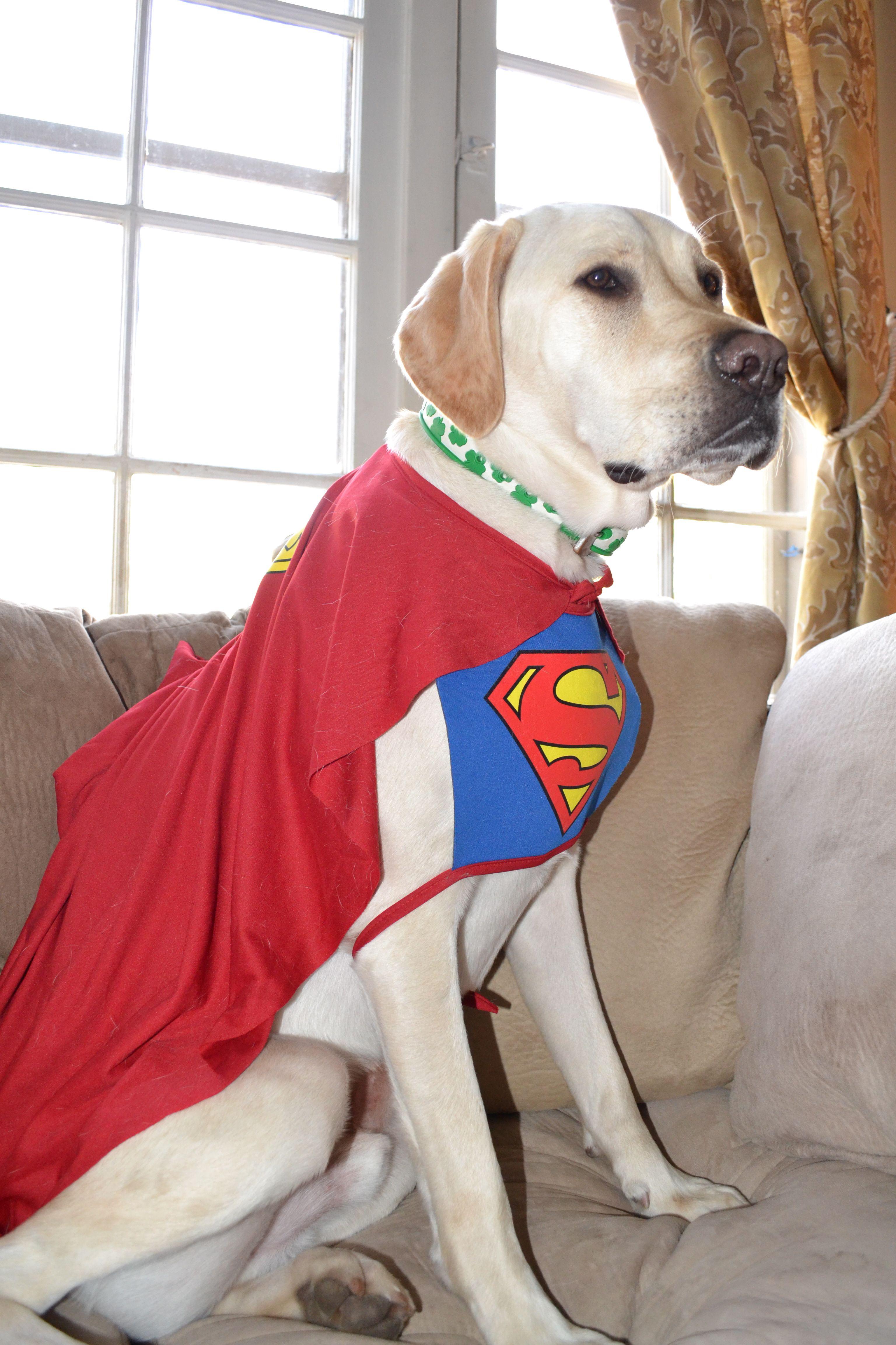 Superman Dog Costume Funny & Superman Dog Costume Funny | Doggy Dress Up | Pinterest | Dog