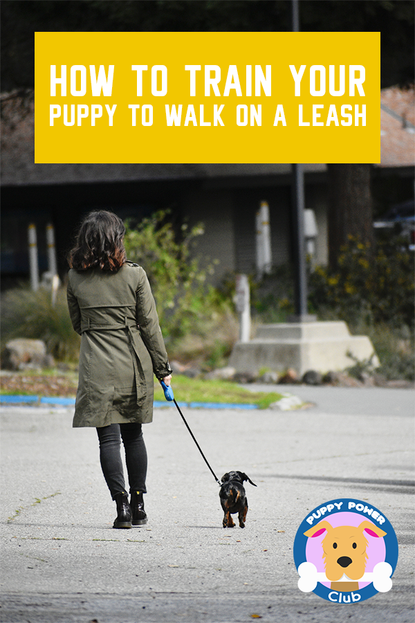 How To Train Your Puppy To Walk On A Leash Puppy Power Club In 2020 Training Your Puppy Dog Training Obedience Dog Training
