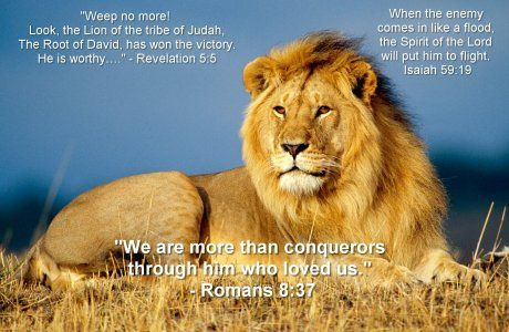 Lion Of The Tribe Of Judah With Lamb The Lion Of Judah Weep No