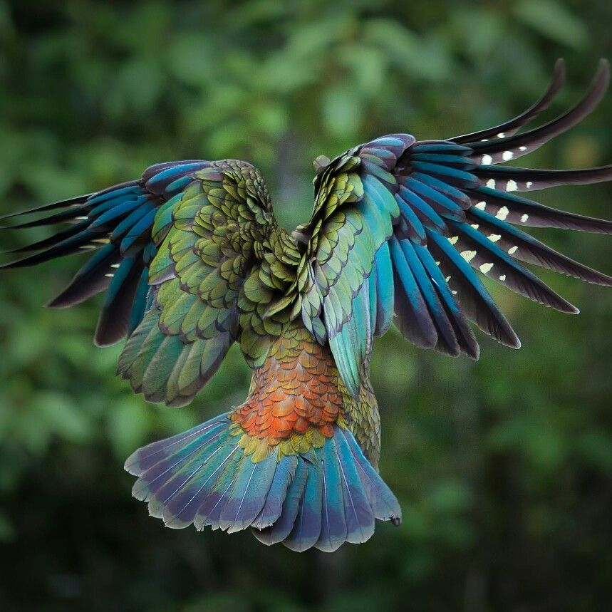 Simply stunning. NZ Kia Bird. #digitalmarketing   #motherearth  #Birds