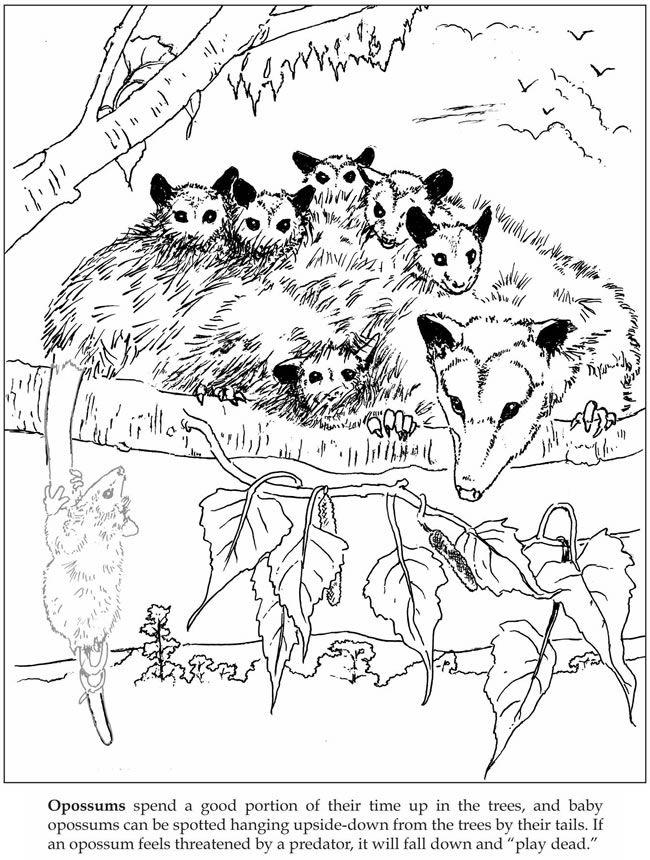 Welcome To Dover Publications Let S Explore Forest Animals Sticker