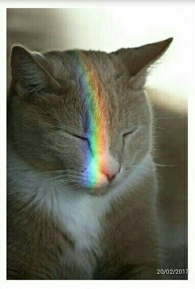 Olha o Arco-iris