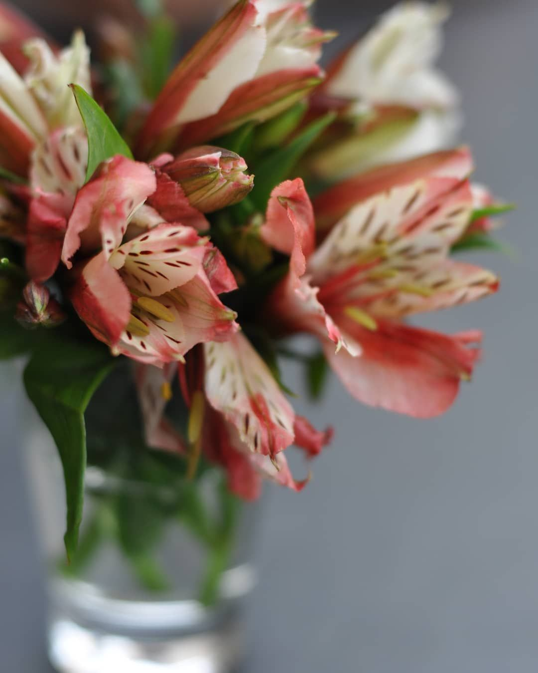 How To Grow And Care For Alstroemeria Also Known As Peruvian Lily In Your Home As Cutflowers Or As Bedding Or In 2020 Alstroemeria Flowers Name List Peruvian Lilies