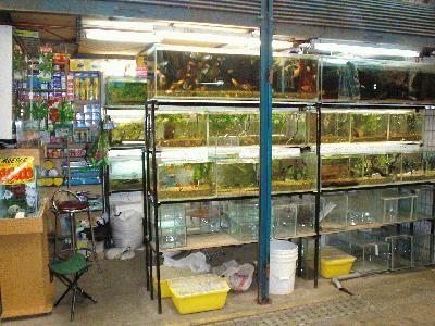 Acuarios el arrecife tiendas www peces de acuario for Fish and more pet store