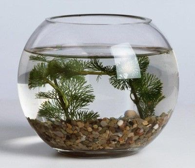 How To Decorate Fish Bowl Decorated Fish Bowl  Fish Bowls  Pinterest  Fish Fish Tanks
