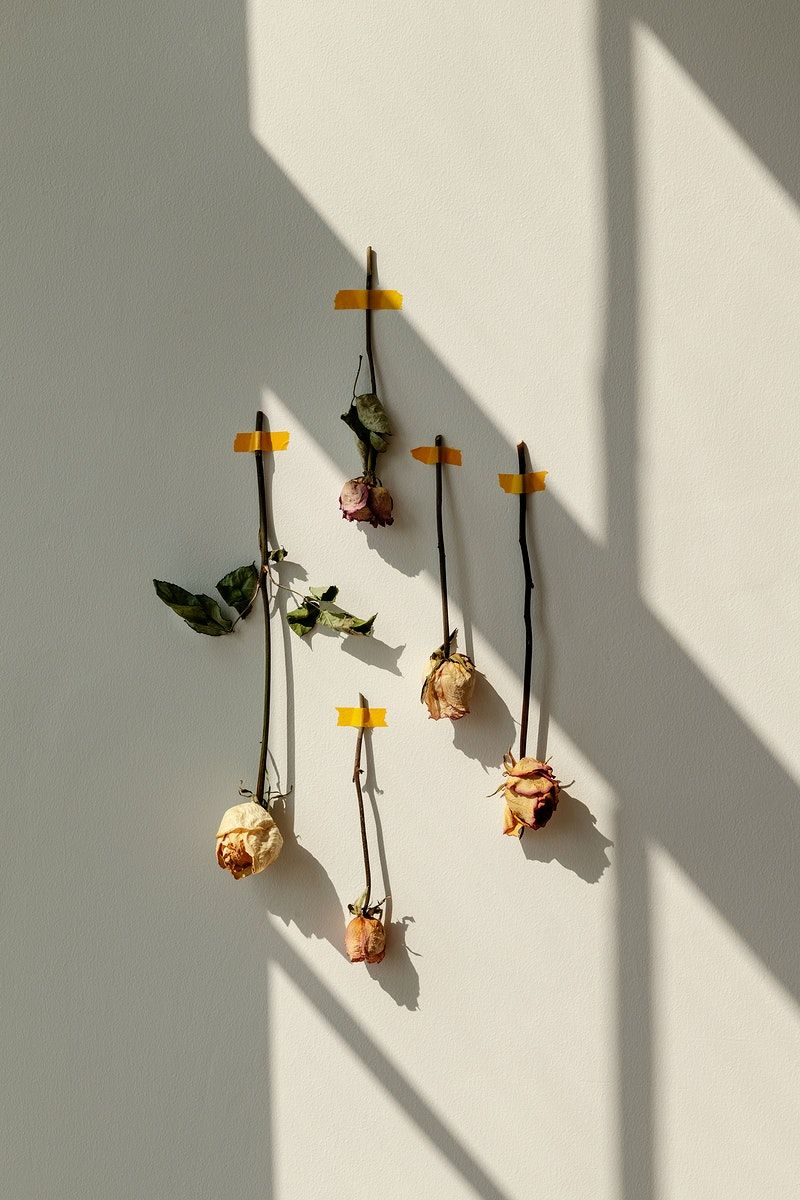 Download Premium Image Of Dried Rose Flowers Taped On A White Wall 2333402 In 2020 Dried Flower Arrangements Flower Wallpaper Diy Wall Art