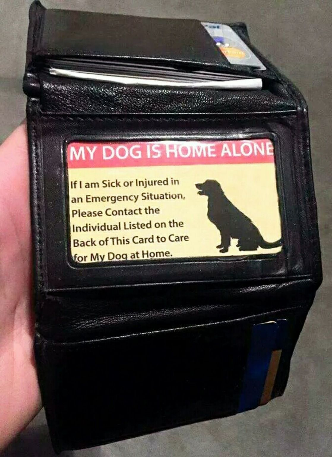 14 Life Hacks That Will Make Your Life A Whole Lot Easier Ftw Gallery Dog Owners Pet Meds Dog Care Tips
