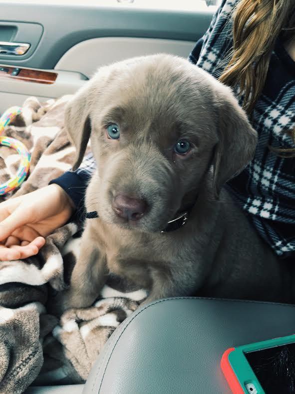 Animals on Hund auto, Hunde und Autos