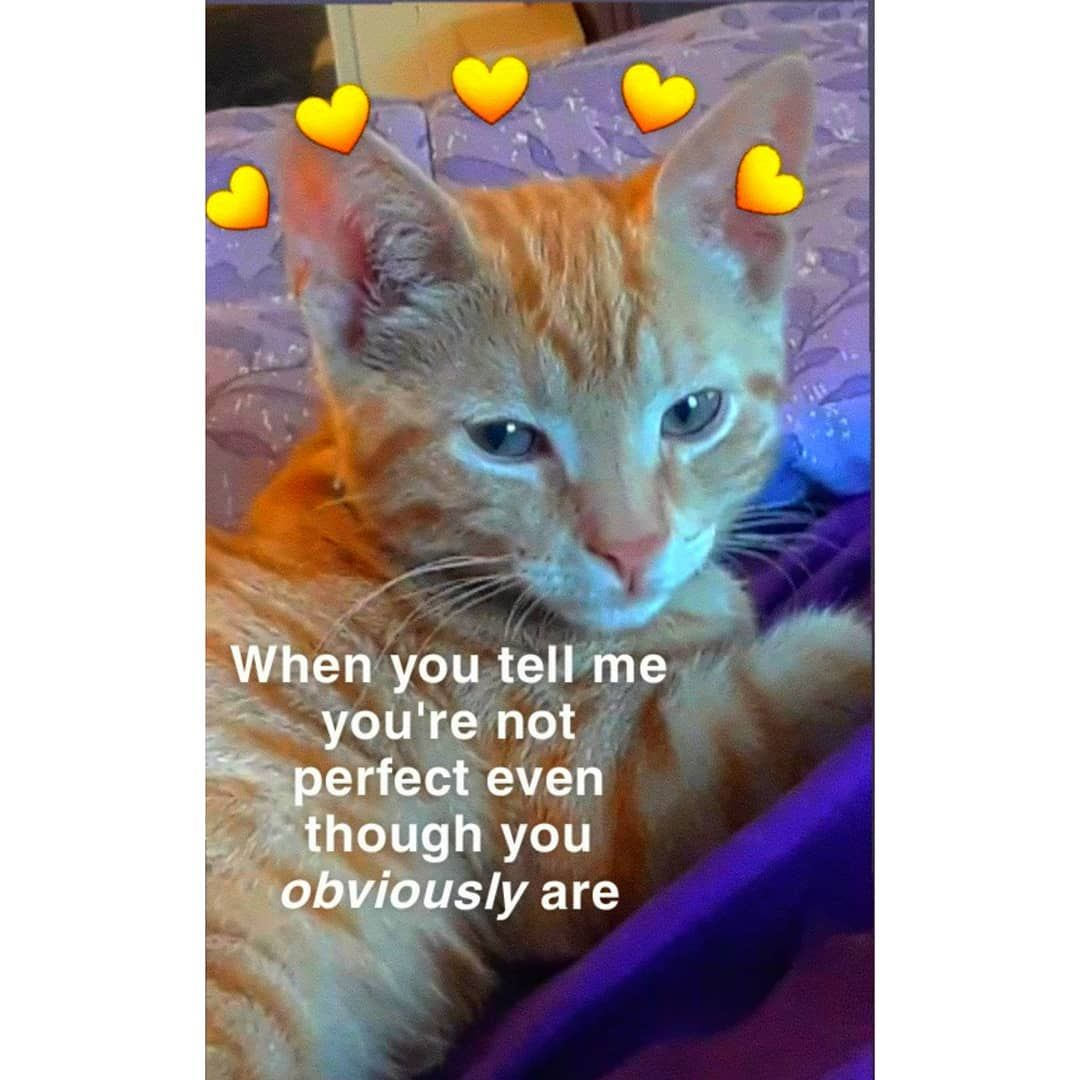 #ily #iloveyou #love #inlove #wholesome #memes # ...