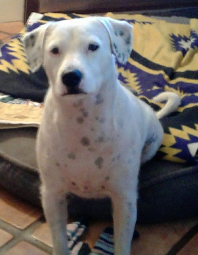Adopt Annie May on Petfinder Help homeless pets, Foster