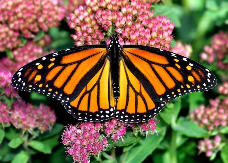 13+ Butterfly spirit animal meaning ideas in 2021