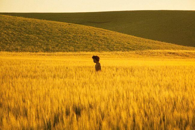 Click to enlarge image Golden-Grassland-2013.jpg