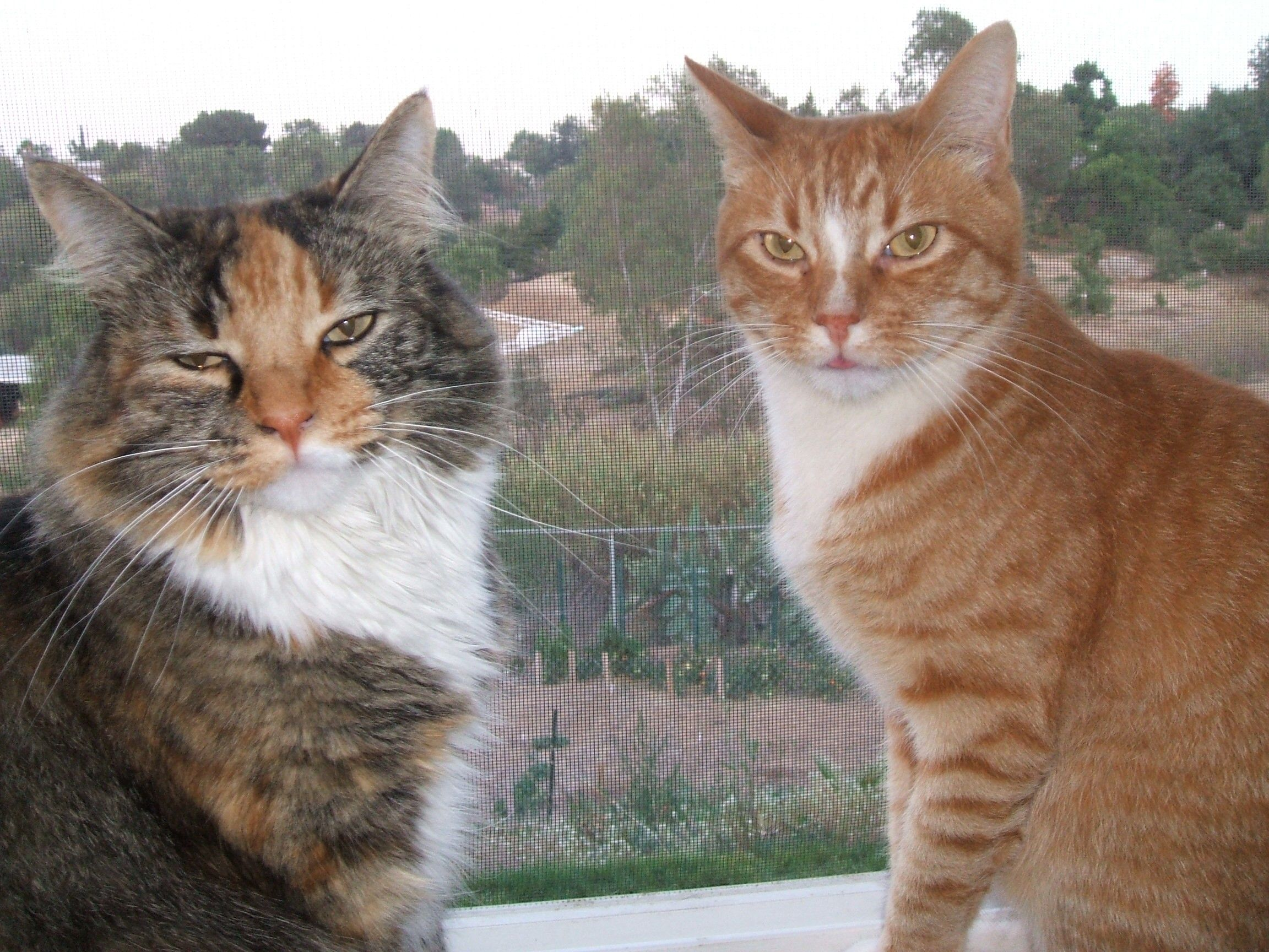 The Rescue Story of Socks and Lucky cats
