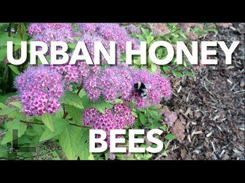 a7e39bd5d0711c404db8e47b4e706bfe - What Is The Importance Of Urban Gardening