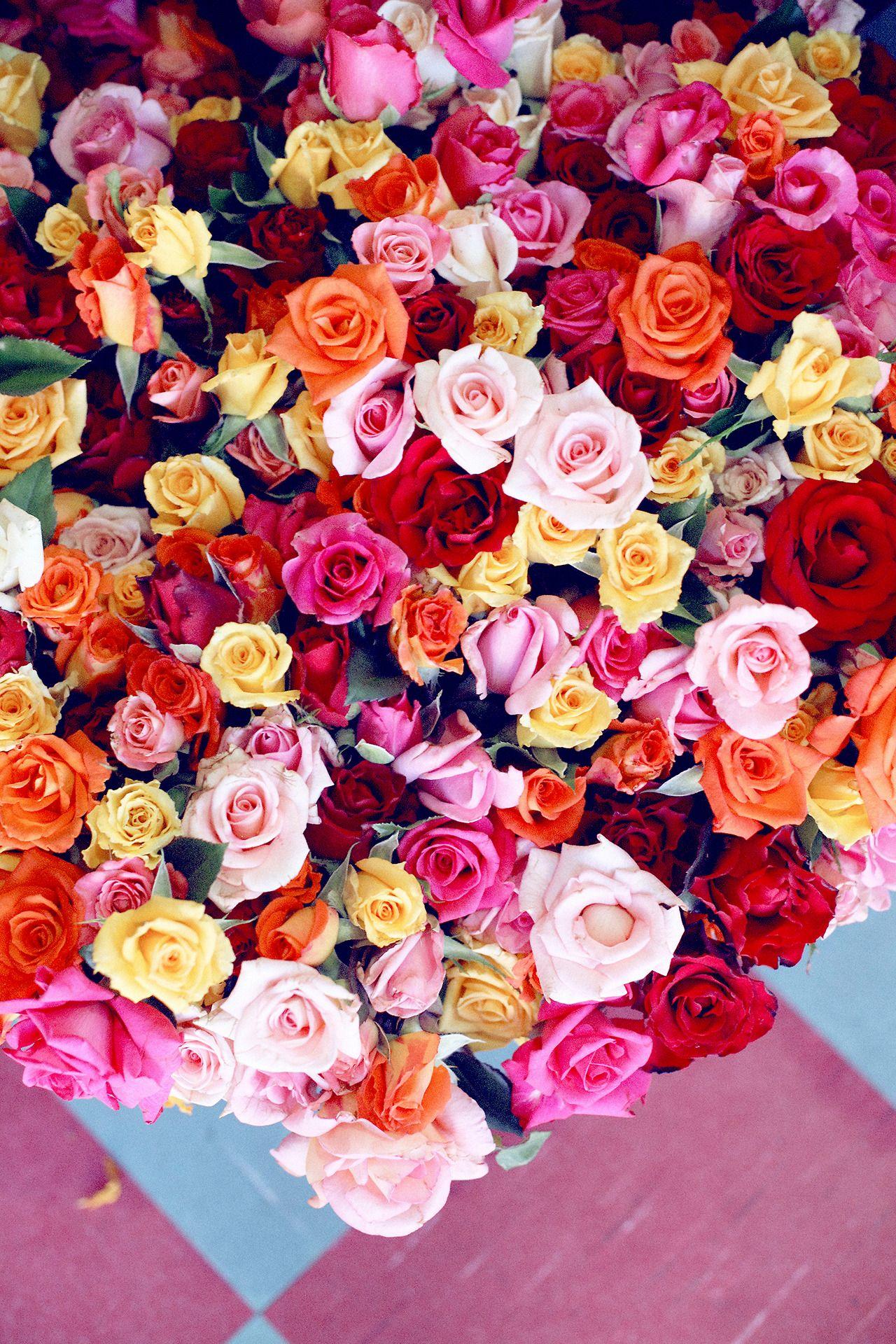 Rose Rainbow Hawaiian Coconut Blooms Pinterest Rainbows And