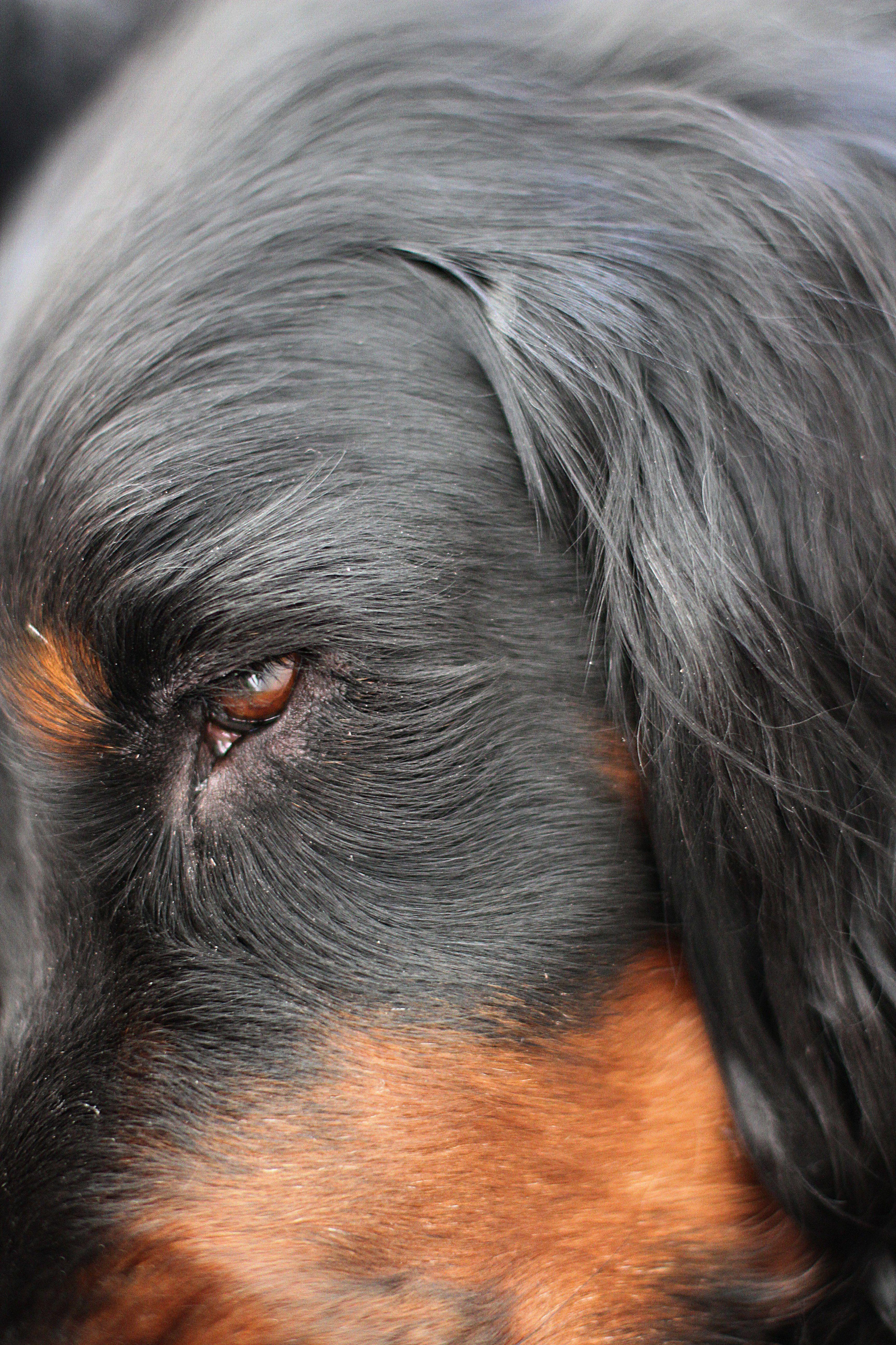 Best Best Gordonsetter In The World Mit Bildern Hunde Tiere