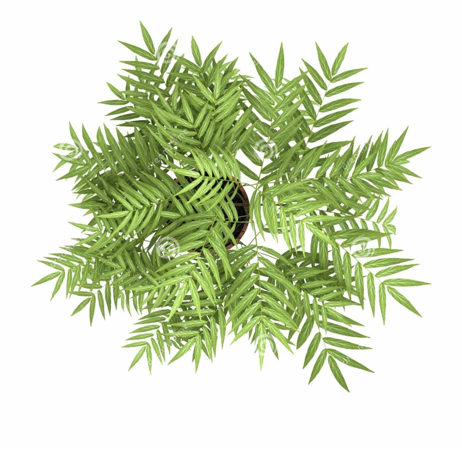 Plant Overlooking Photography Tree The Flowers Stock Bamboo Tree Top View Transparent Png Image For Free Do Trees Top View Tree Plan Photoshop Tree Photoshop