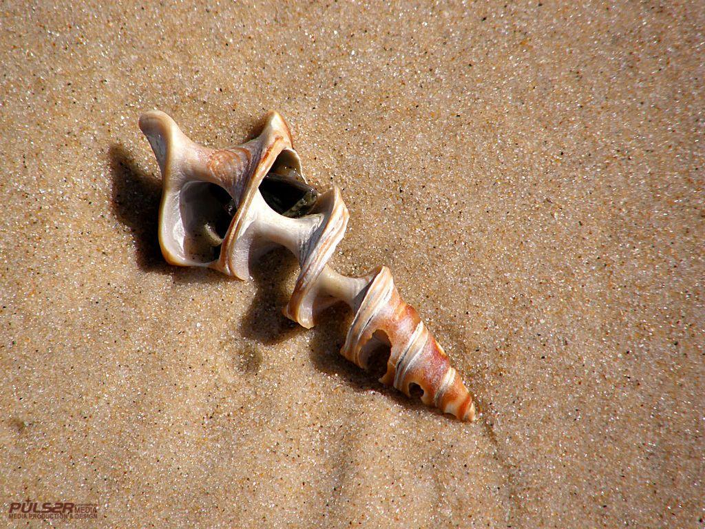 Conchiglie - Foto per sfondi desktop: http://wallpapic.it/oceano-e-mare/conchiglie/wallpaper-10244