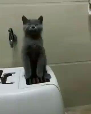 Sync cat...  #cat #cute