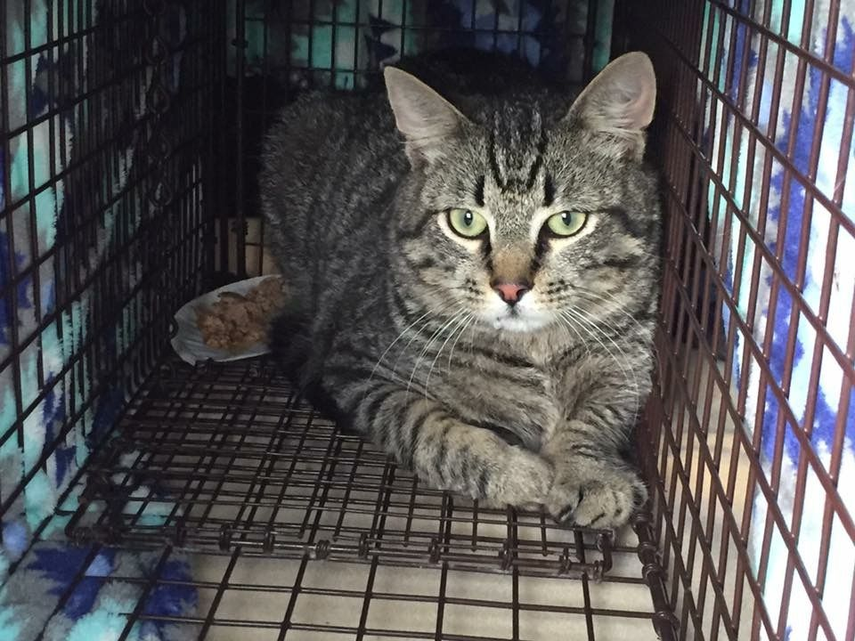 Gucci from our Denham Springs colony. TNR is the only
