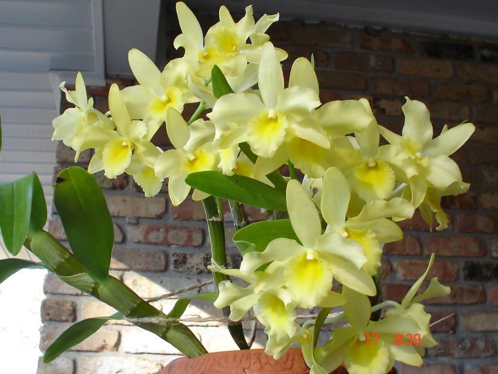 новости, мероприятия, орхидея канари фото нейл-арт
