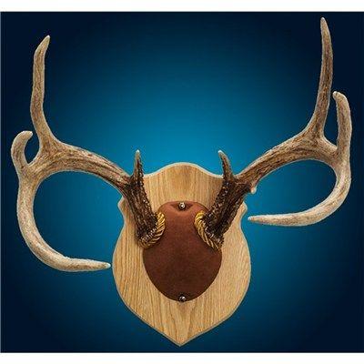 Oak Walnut Hollow Country Antler Mount /& Display Kit
