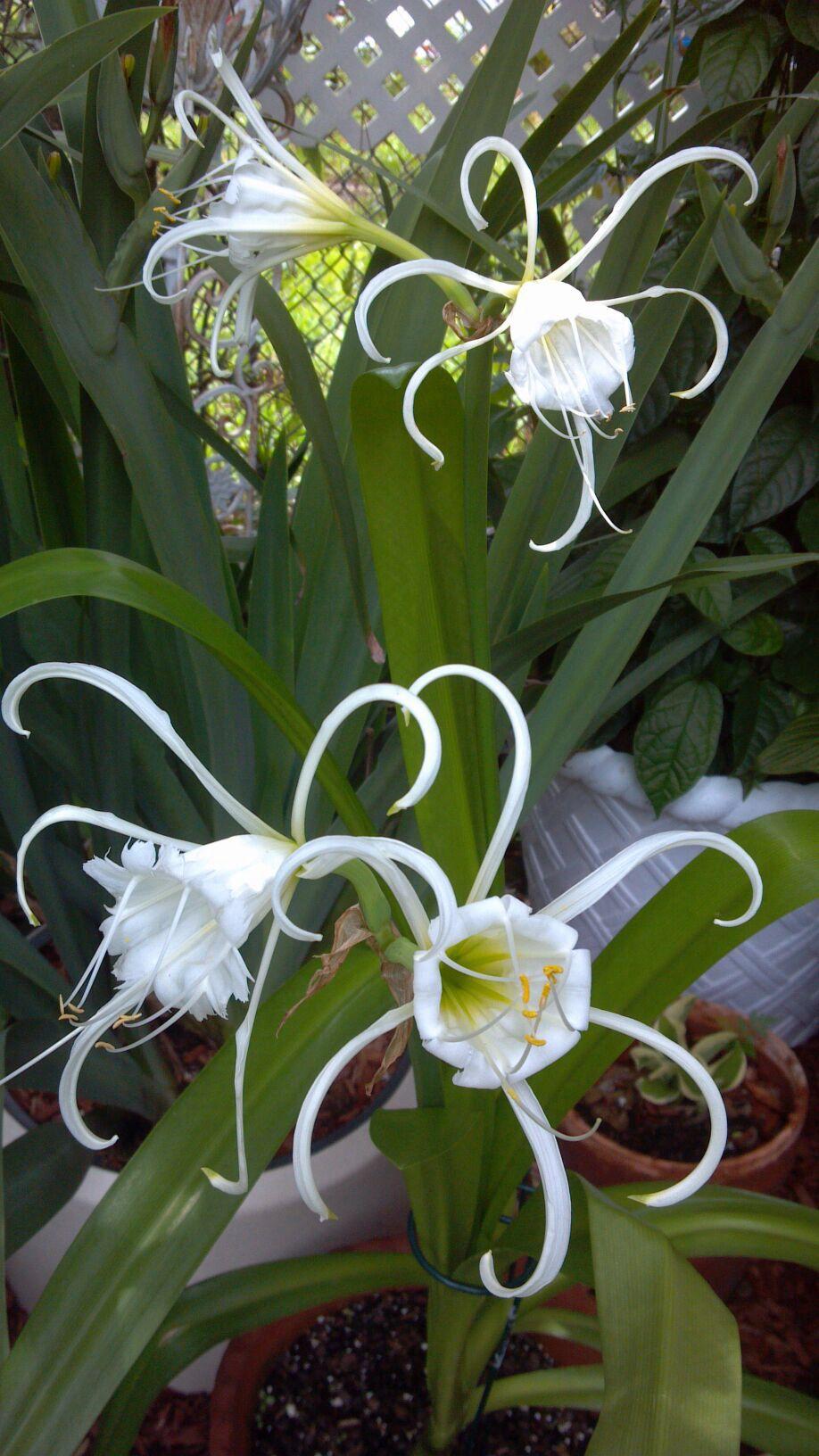 Beautiful Orchids From My Friends Garden Orchids Pinterest
