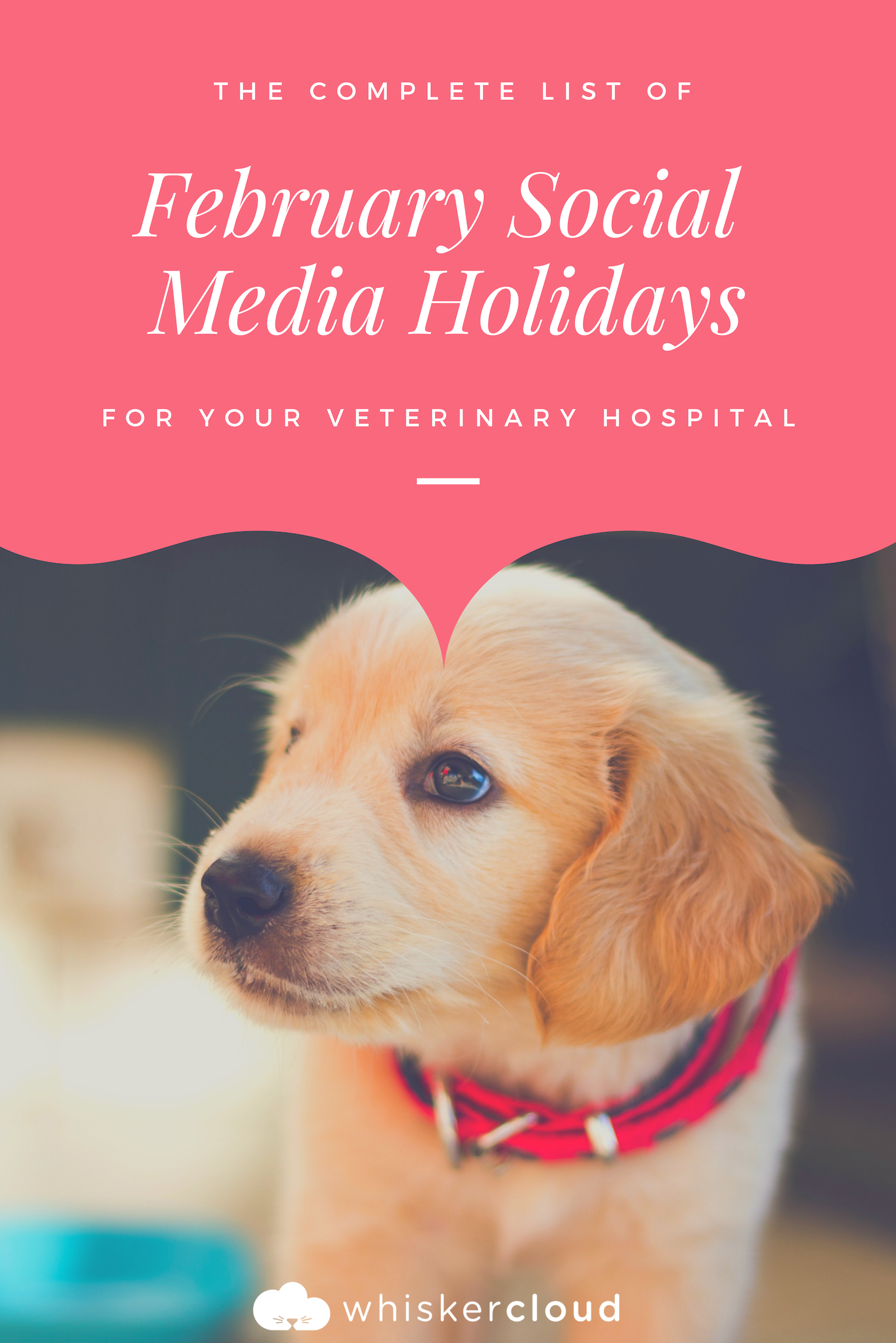 Complete List Of February Social Media Holidays For Veterinary Hospitals Veterinary Hospital Veterinary Hospital Marketing