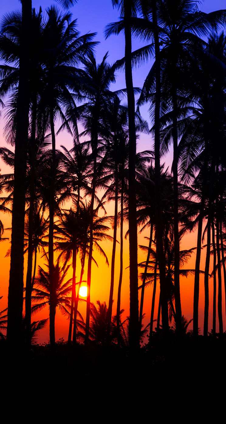 Sunset Sun Color Palm Trees Wallpaper Tree Wallpaper Tree Wallpaper Iphone