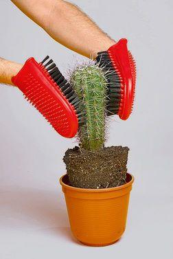 Kaktus Umtopfen | Zimmerpflanzen | Pinterest | Garten Tipps Umtopfen Zimmerpflanzen