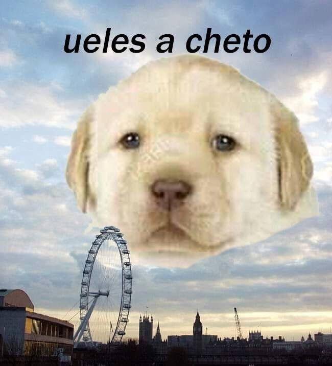 25 Memes Del Perrito Tierno Que Son Efectivamente Muy Tiernos Memes Perros Memes Memes Divertidos