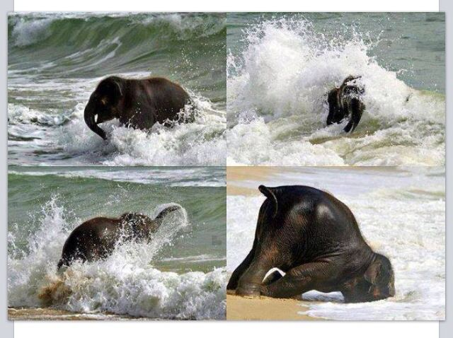 Elephant sees water for the first time!