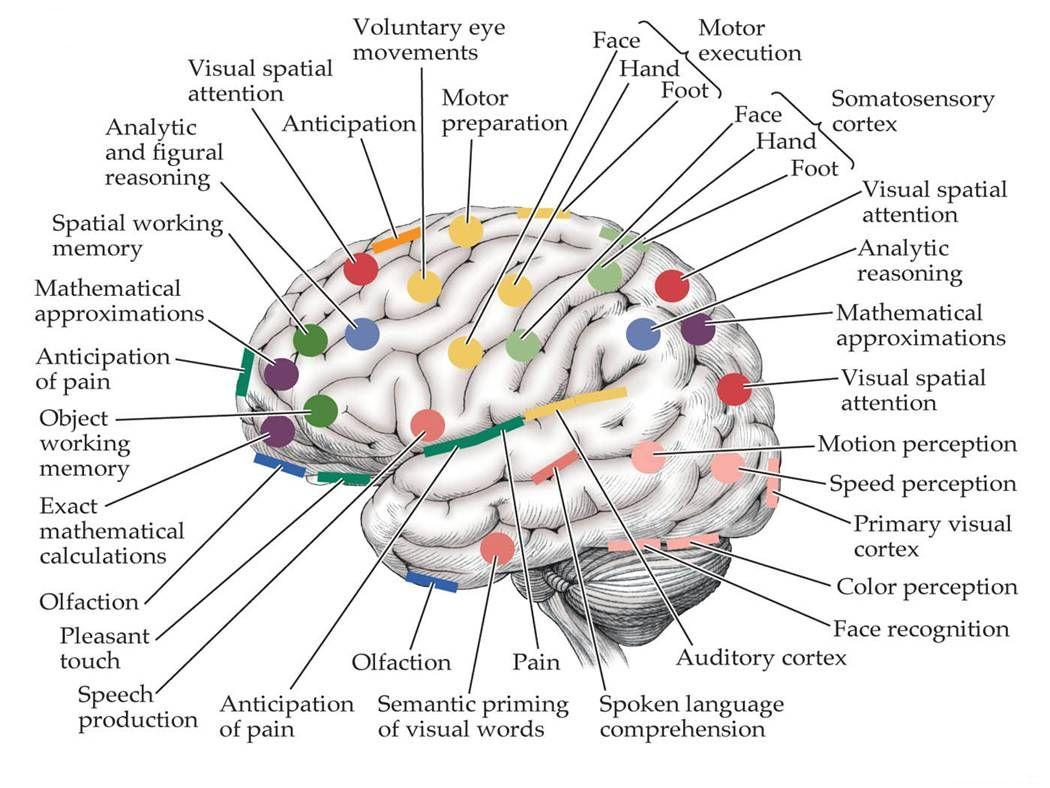 Related image | Ron neurology | Pinterest | Gehirn, Prüfung und Medizin