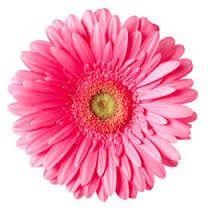 Colorful Daisy Flower Clip Art