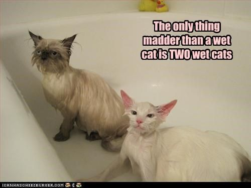 The 26 Funniest Wet Cats Pictures Of All Time Smeshnye Foto Koshek