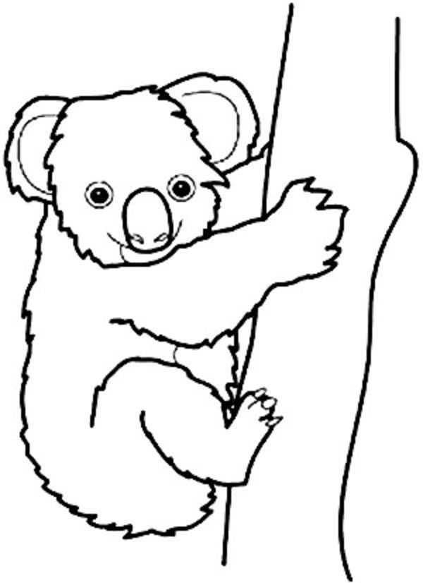 It is a graphic of Canny Koala Bears Coloring Pages