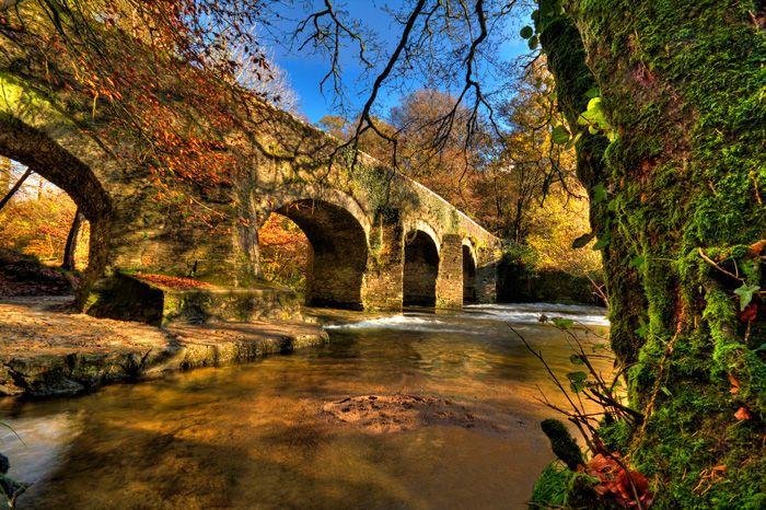 Bridge over River Plym, Plymbridge Woods