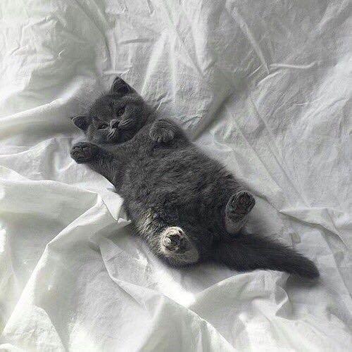 Pin this now!! #cat #ilovemycat #meow #cats_of_world #pet #ilovecats #cute #cutecat #catnap #catoftheda