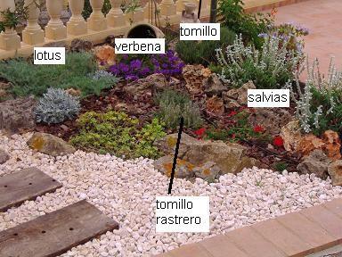 Plantas para rocalla infojardin en el jard n pinterest for Plantas para rocallas