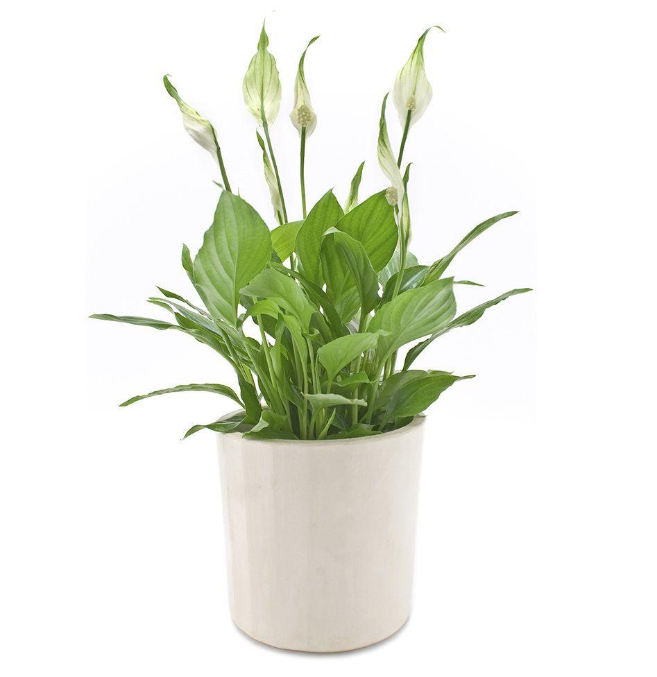 7 Office Plants You Won't Kill   Office plants, Plants ...