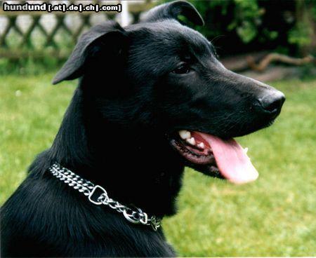Majorca Shepherd Dog Ca De Bestiar Perro De Pastor Mallorquin Dogs Sheepdog Dogs And Puppies