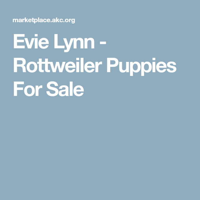 Evie Lynn Rottweiler Puppies For Sale Dog Stuff Pinterest
