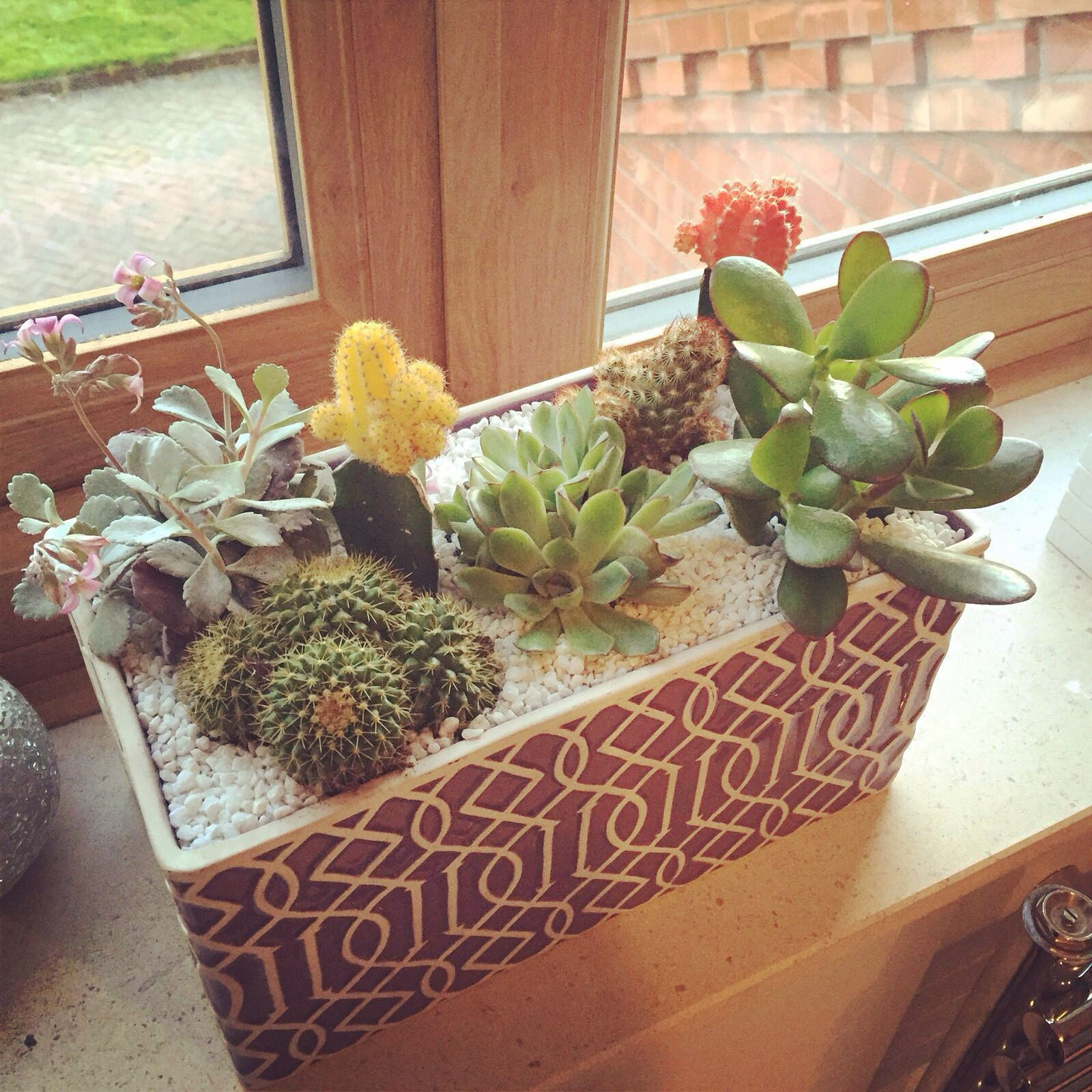 Cactus Succulent Indoor Garden Super Easy To Make